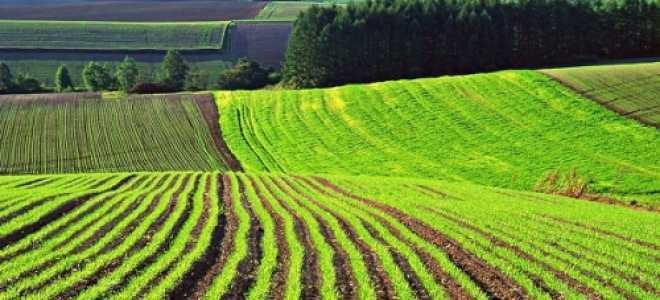 Рациональное использование земельного участка