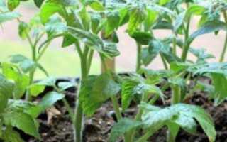 Обработка томатов и перца от болезней