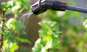 Профилактин для сада: как и когда использовать, для чего