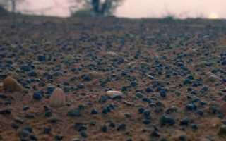 Как определить спелость почвы