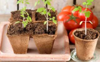 Сроки посева семян томата на рассаду в Ленинградской области